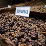 O café mais caro do mundo se chama kopi luwak